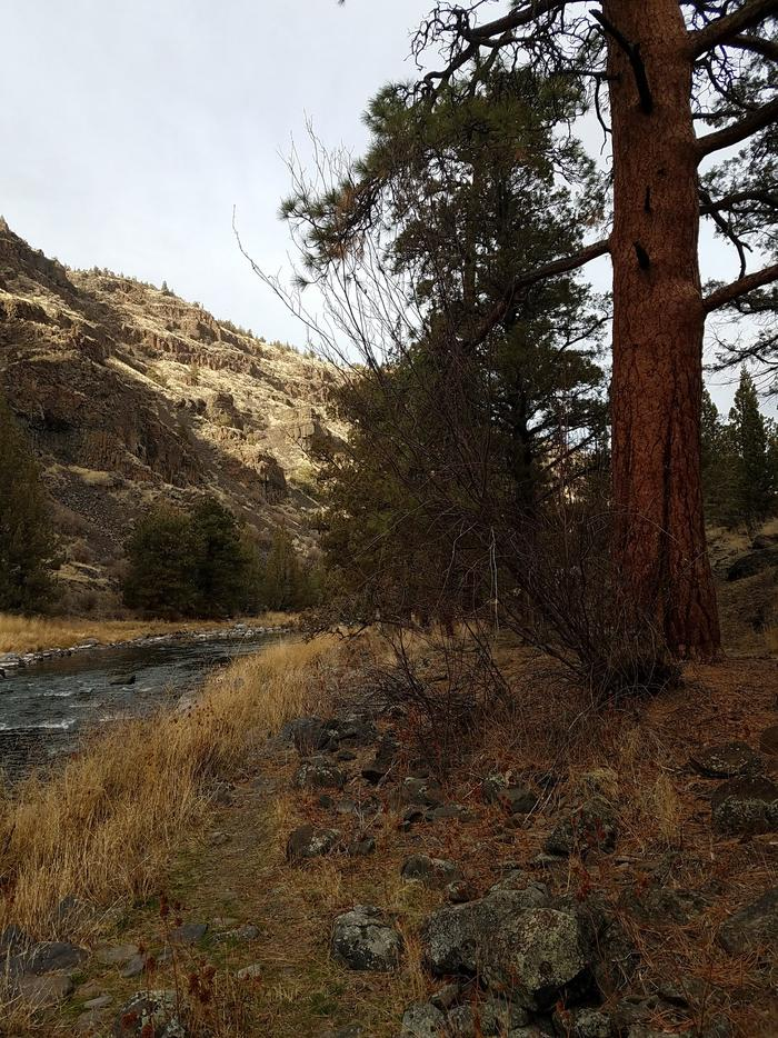 Ponderosa Pine at Poison Butte Campground