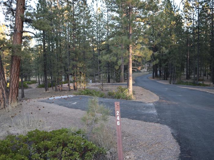 Sunset Campground Site 246Site 246