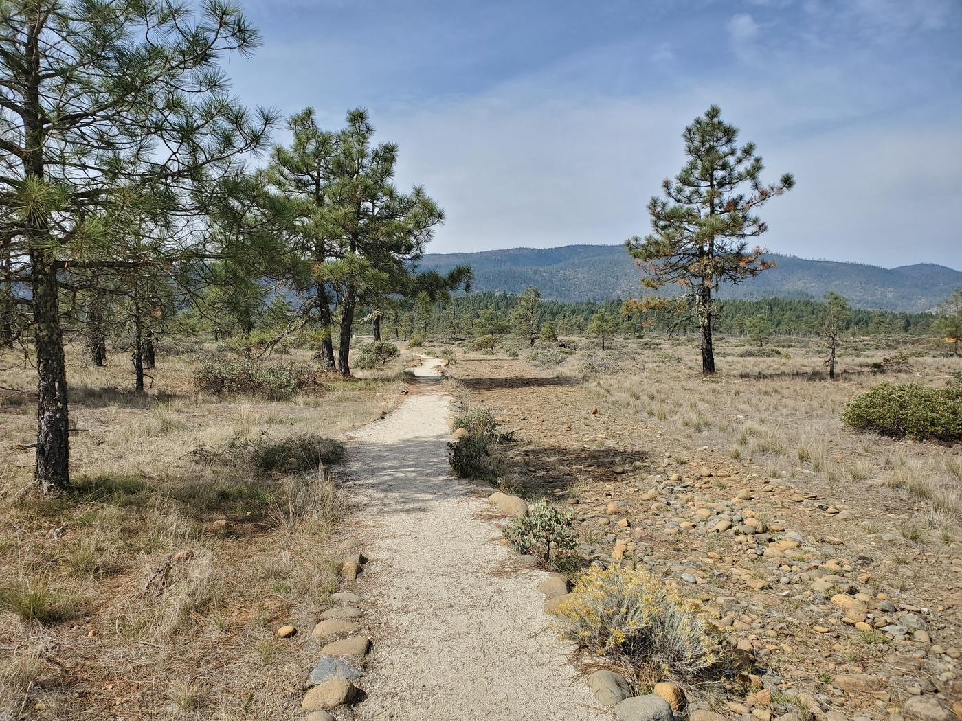 View along the Rough and Ready Flat trail.
