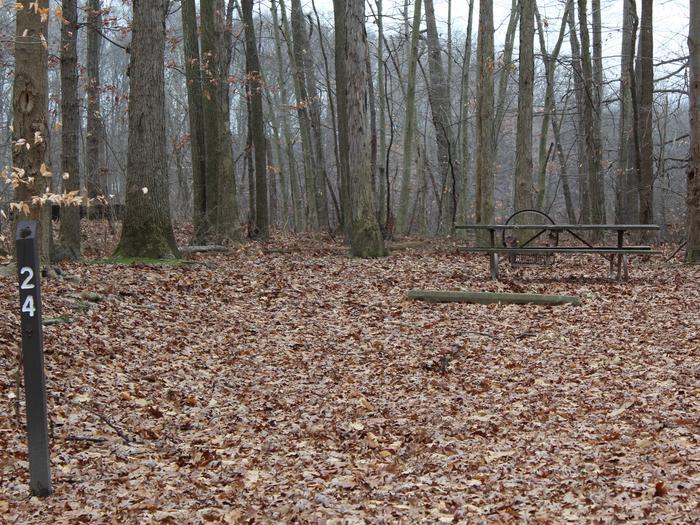 An image of the Oak 24 Campsite.The Oak 24 Campsite.