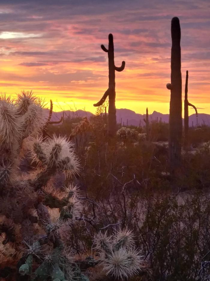 Organ Pipe Cactus National Monument SunsetAnother Day Ends