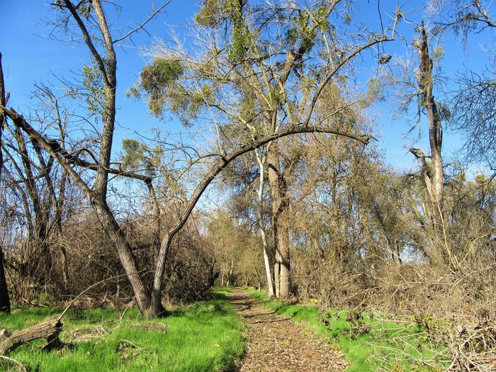 McHenry Ave. TrailScenic nature trail along the Stanislaus River at McHenry Avenue Recreation Area