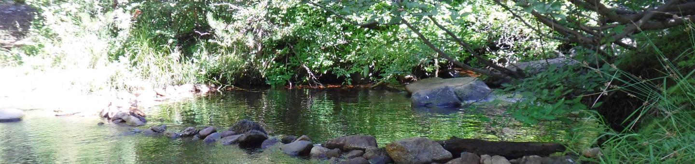 Chapman Creek