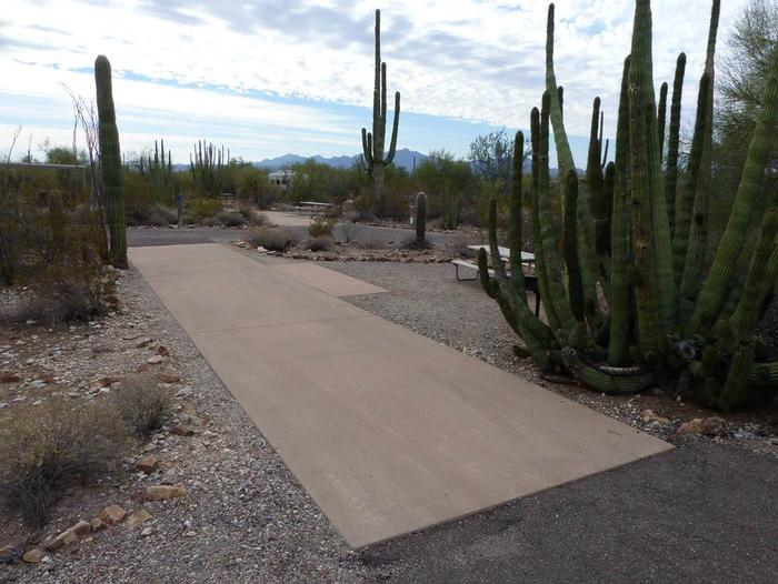 Pull-thru campsite with picnic table and grill, cactus and desert vegetation surround site.  Site 011