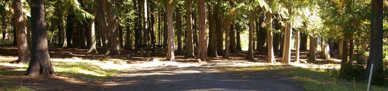 Sam Owen Campground Site 65