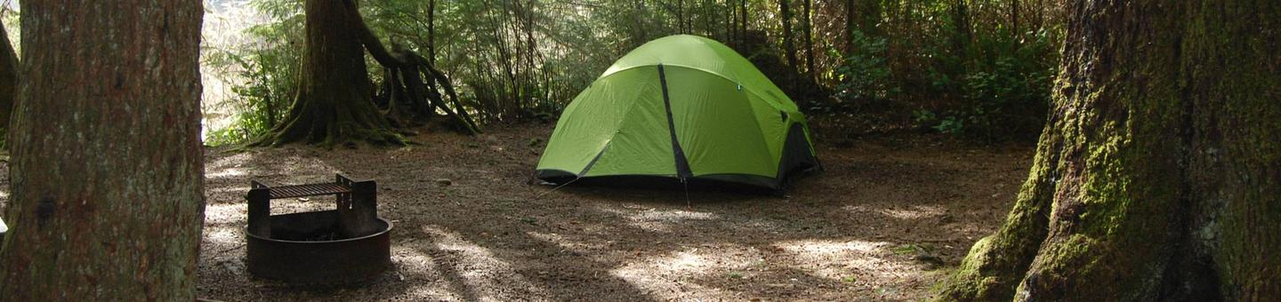 green tent in campsite surrounded by large treesTent in Mora Campground