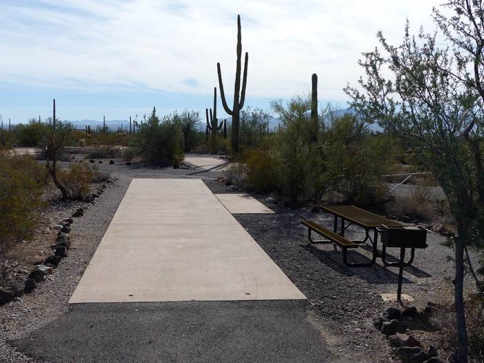 Pull-thru campsite with picnic table and grill, surrounded by cactus and desert vegetation.Site 113