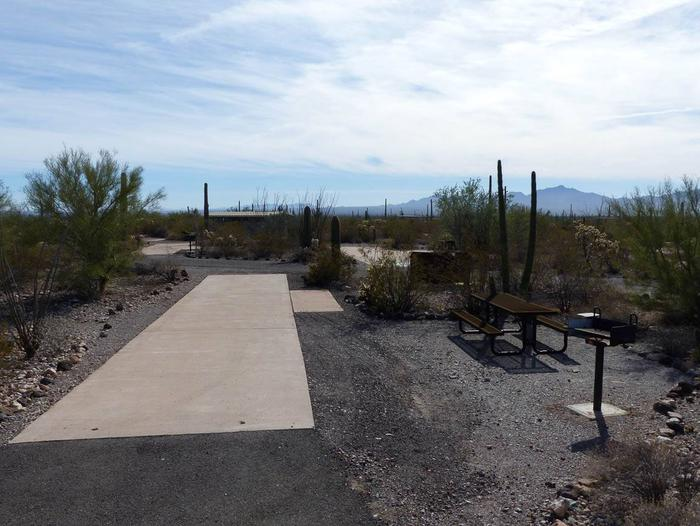 Pull-thru campsite with picnic table and grill, surrounded by cactus and desert vegetation.Site 115