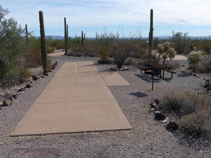 Pull-thru campsite with picnic table and grill, surrounded by cactus and desert vegetation.Site 141