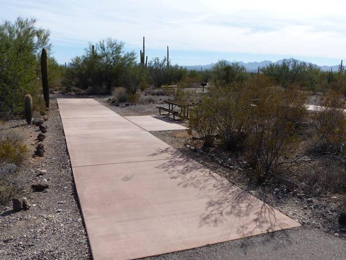 Pull-thru campsite with picnic table and grill, surrounded by cactus and desert vegetation.Site 166