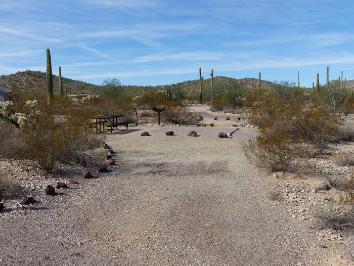 Pull-in parking tent camping site with picnic table and grill. Surrounded by cactus and desert vegetation.Site 188