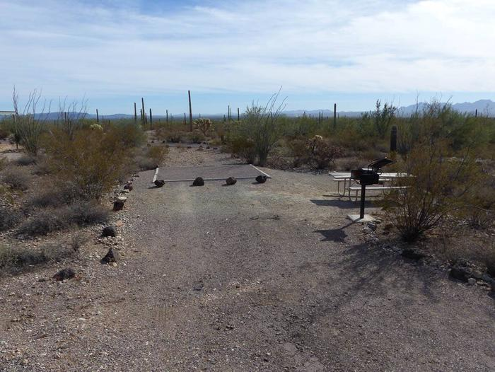 Pull-in parking tent camping site with picnic table and grill. Surrounded by cactus and desert vegetation.Site 202