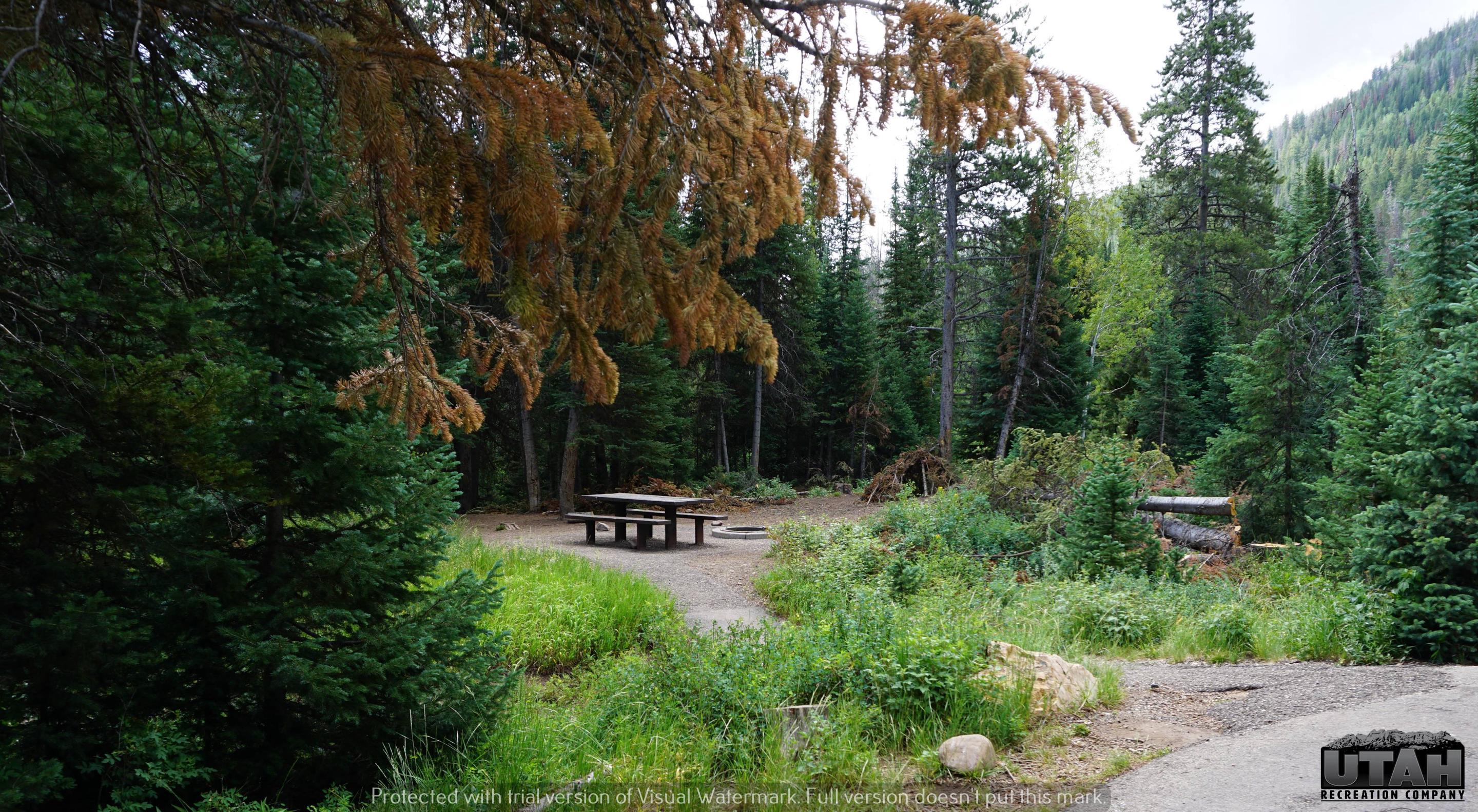 Ledgefork Campground A - 026