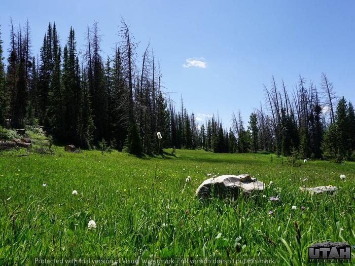 Preview photo of Lost Creek Campground