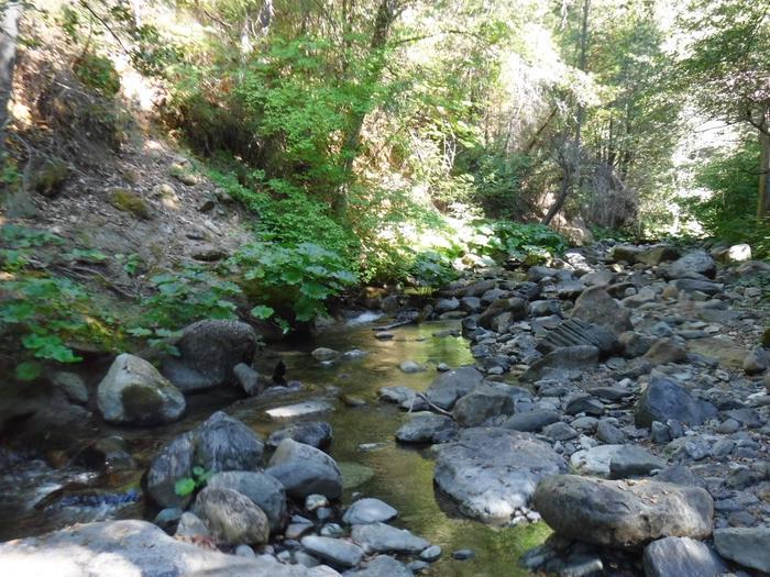 Fiddle Creek