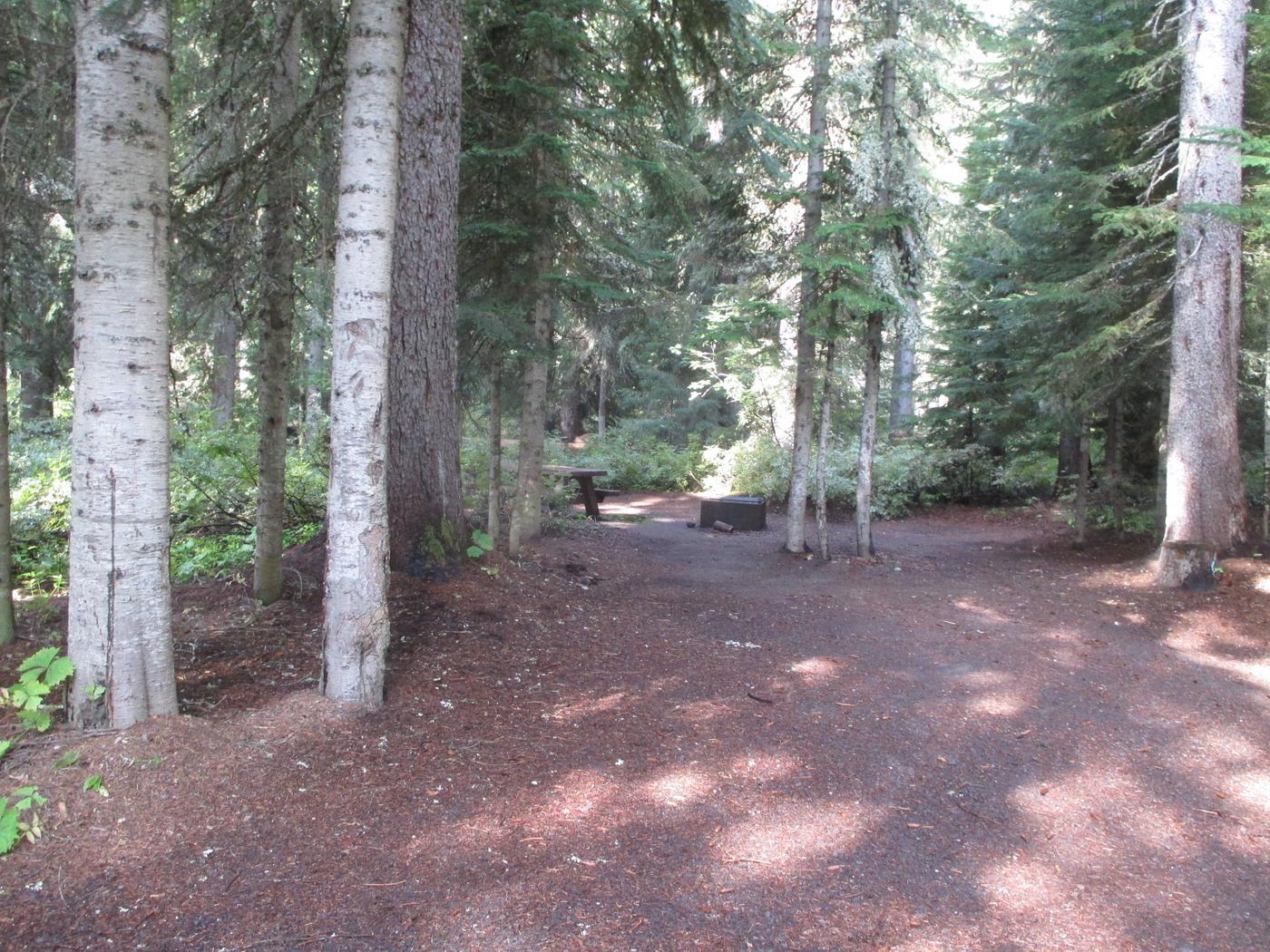 Trapper Creek Site 10Site 10
