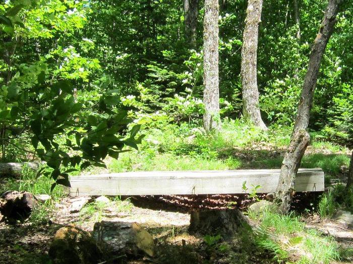 tent pad in a forested, shady campsitecampsite 4