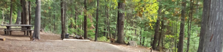 Osprey Campground Site 4