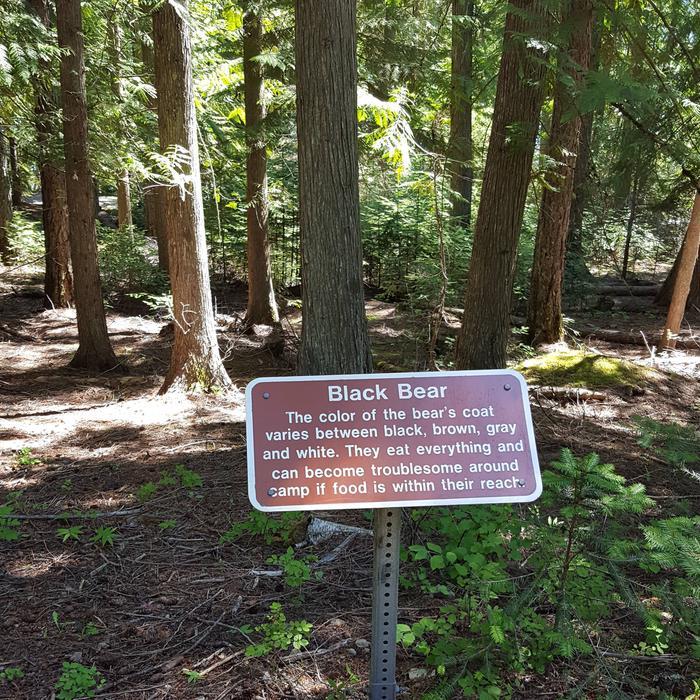 Black Bear Sign at Osprey CampgroundInterpretive Sign at Osprey Campground