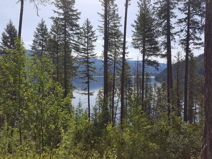 Priest Lake thru the trees