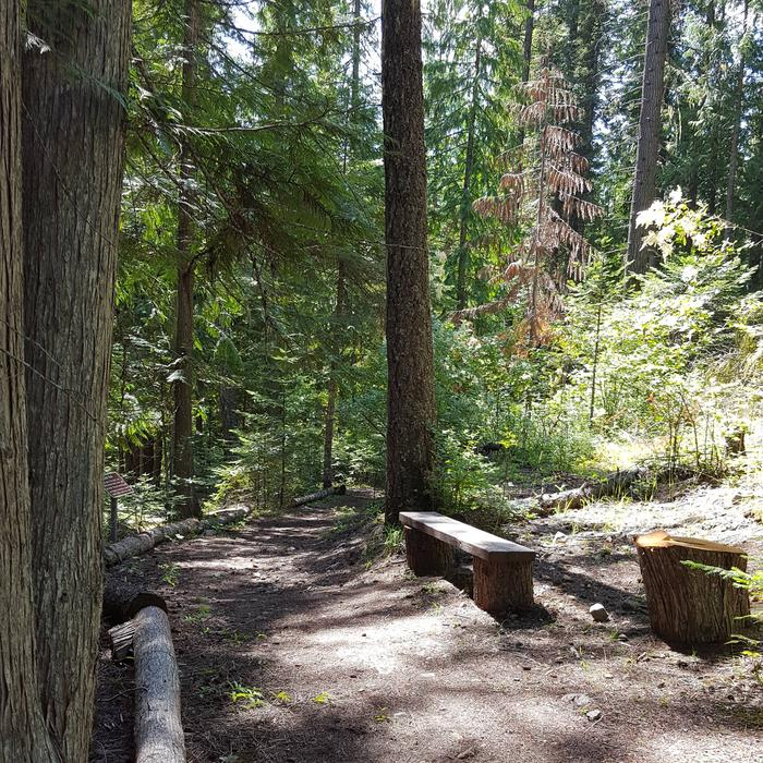 Trail at Osprey Campground