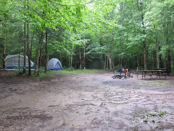 Picnic table and camp setup in wooded campsitecampsite 17