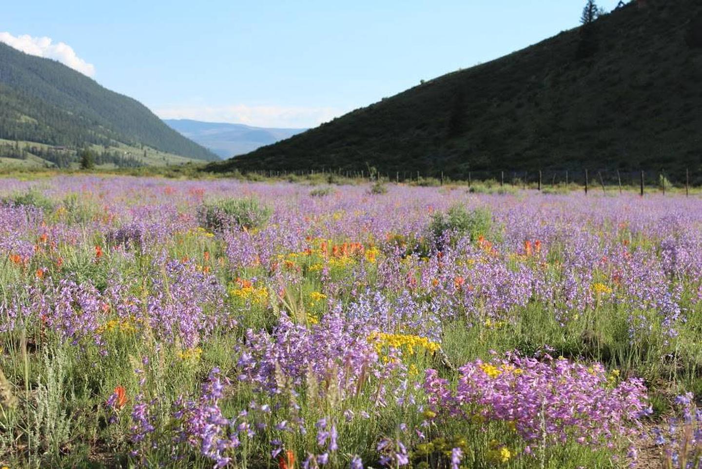 Wildflowers at Marshall Park Campground