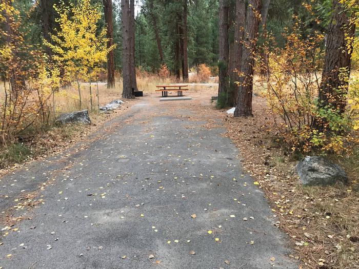 Fall foliageSite 2 entry