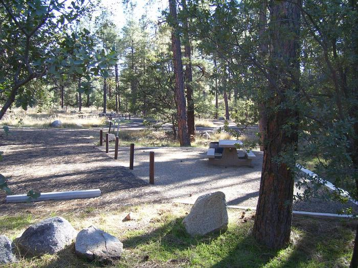 White Spar Site 20 back in parking area and 12 by 12 graveled tent pad surrounded by Ponderosa PineWhite Spar Site 20