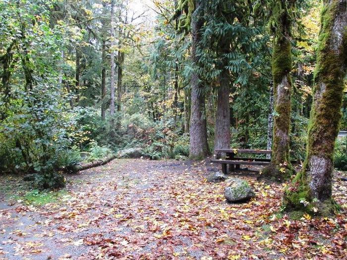 Verlot Campground Site 4