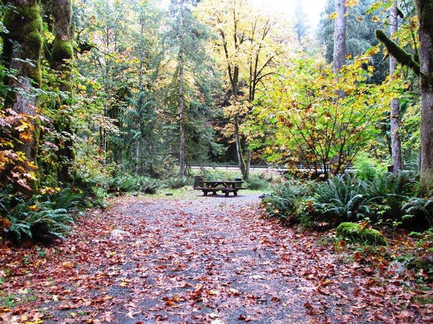 Verlot Campground Site 5