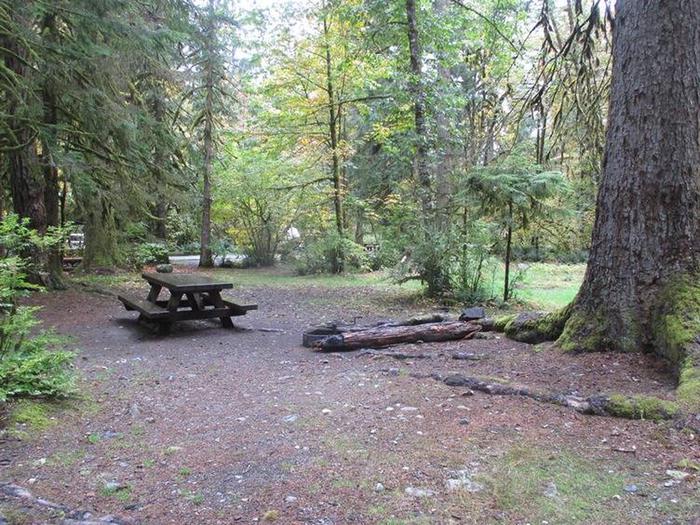 Verlot Campground Site 23