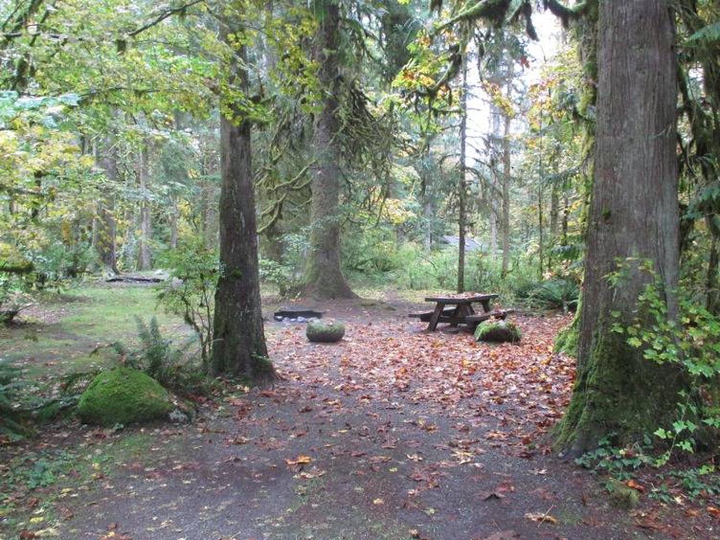 Verlot Campground Site 24