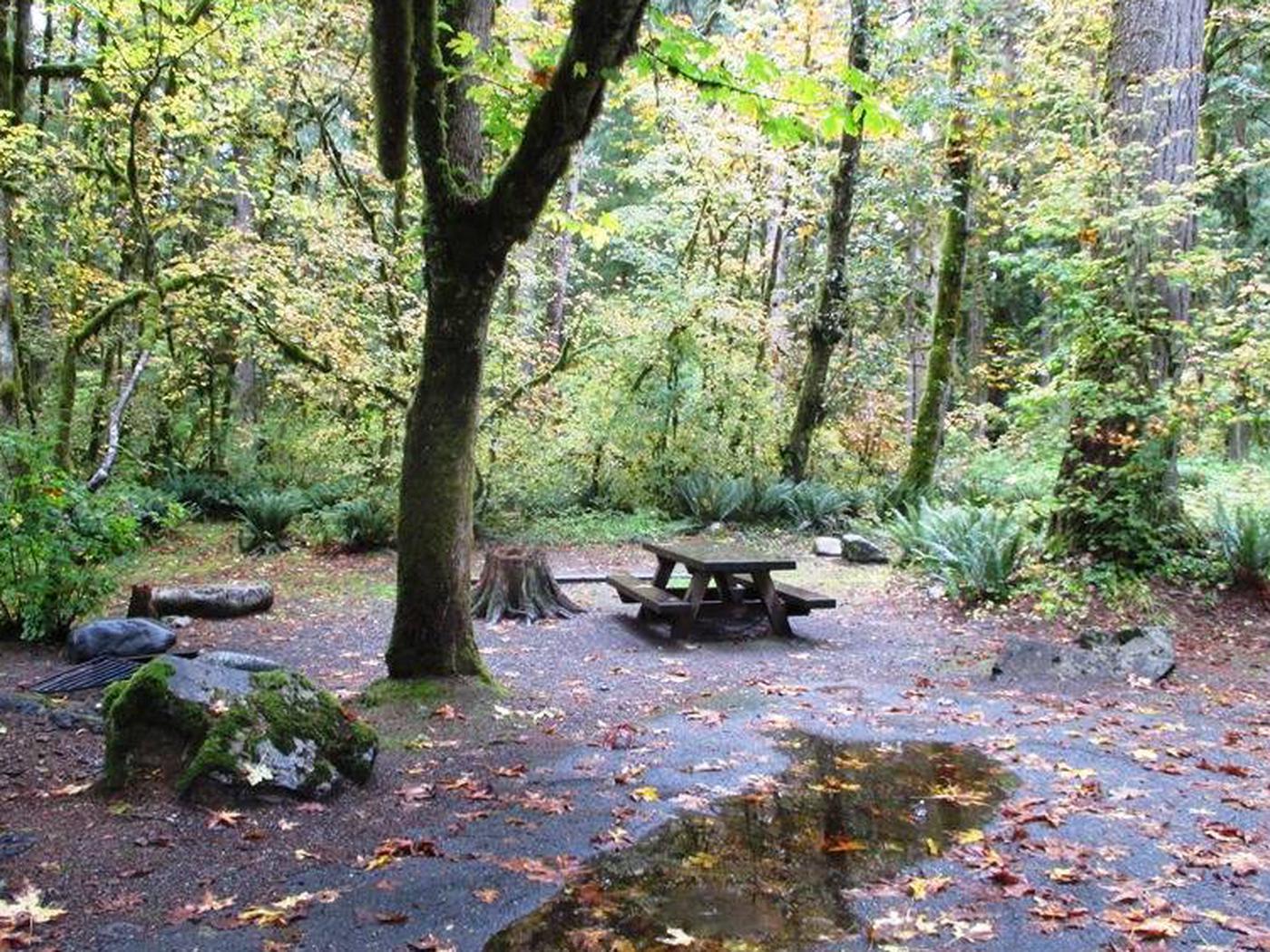 Verlot Campground Site 26