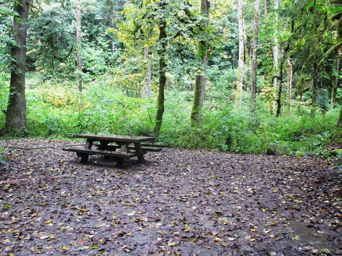 Turlo CampgroundSite 7