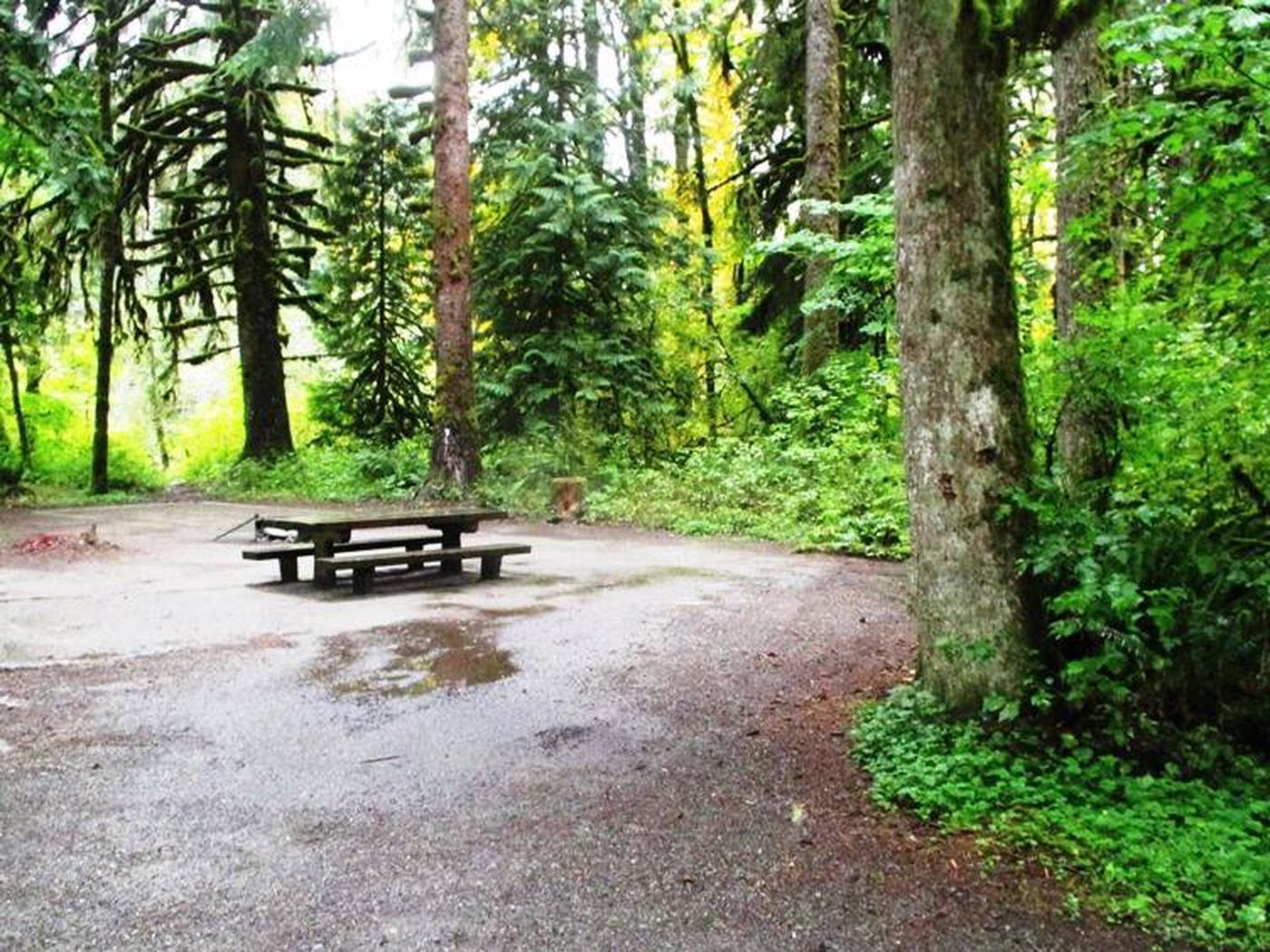 Turlo CampgroundSite 12