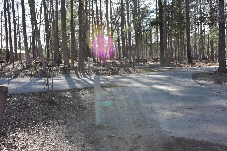 Fox Loop Site 8-3Fox Loop Site 8, March 6, 2020