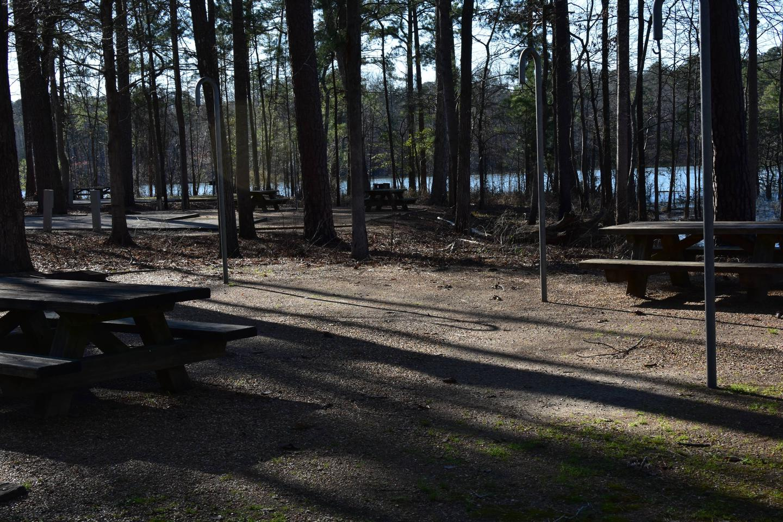 Fox Loop Site 12-5Fox Loop Site 12, March 6, 2020