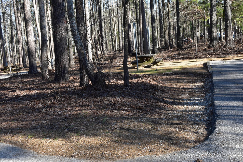 Fox Loop Site 15Fox Loop Site 15, March 6, 2020