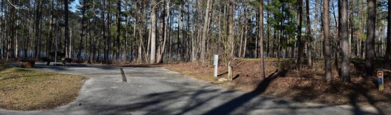 Fox Loop Site 19Fox Loop Site 19, March 6, 2020