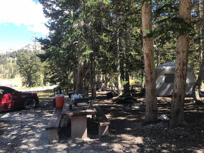 12 Mile Flat Campground Site #9
