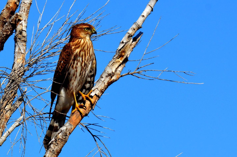 Abundant Wildlife In and Around Twin Peaks Campground