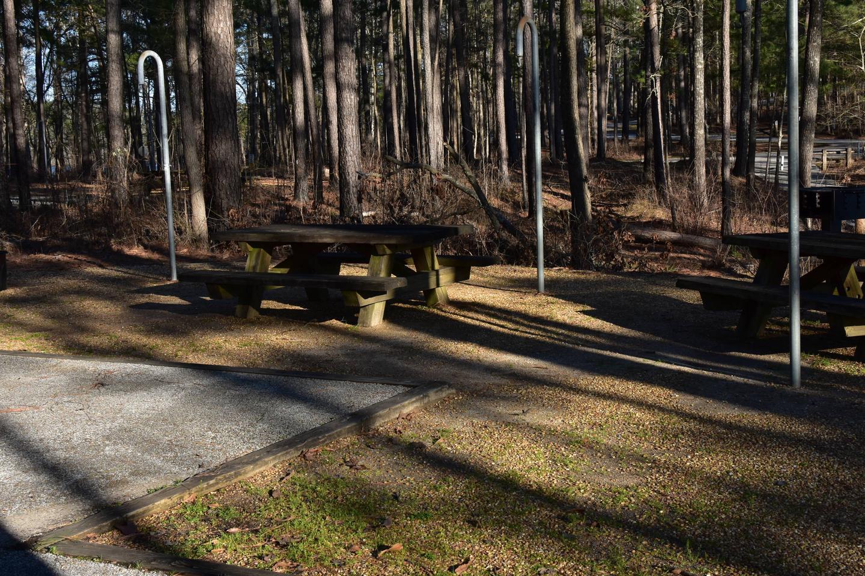 Fox Loop Site 24-5Fox Loop Site 24, March 6, 2020