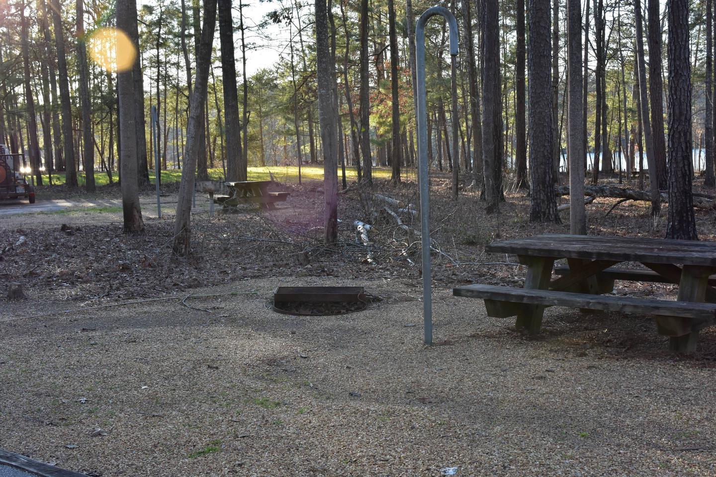 Fox Loop Site 31-5Fox Loop Site 31, March 6, 2020