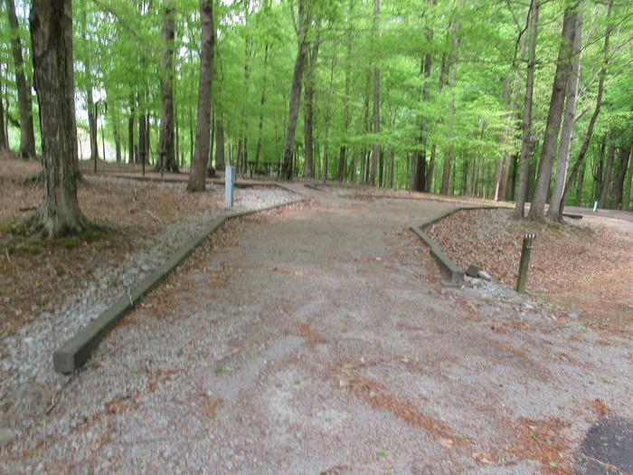Campsite 117