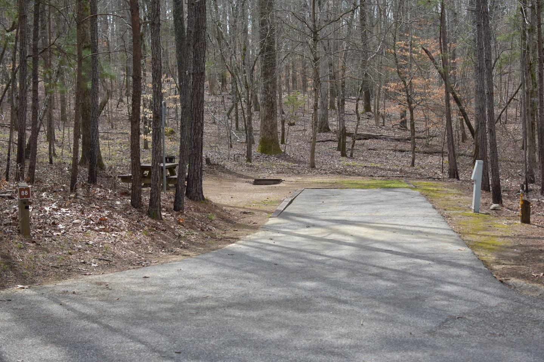 Bear Site 88Bear Site 88, March 1, 2020