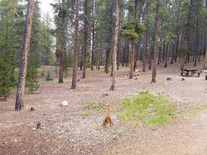 Baby Doe Campground, Site 15 surrounding trees