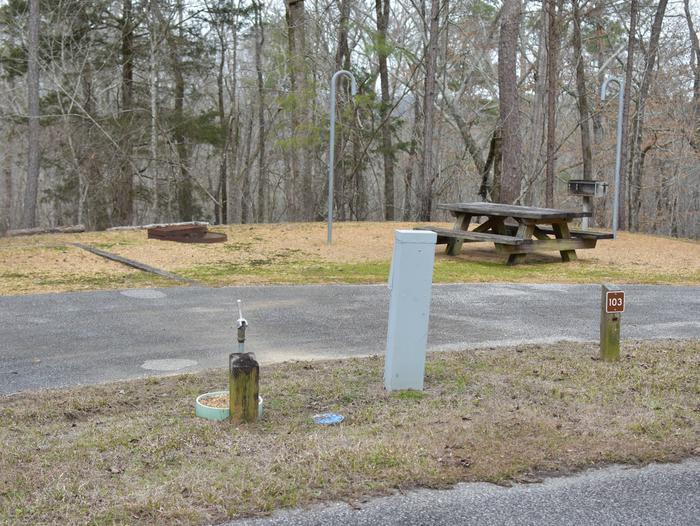 Bear Site 103Bear Site 103, March 1, 2020