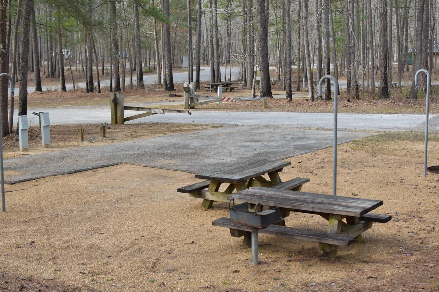 Fawn Site 62-3Fawn Site 62, March 1, 2020