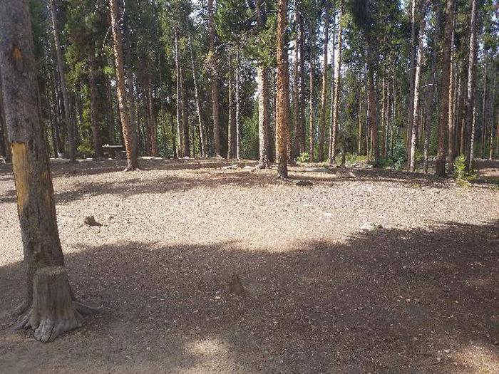 Baby Doe Campground, Site 28 clearing